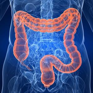 Probióticos, regeneradores de flora intestinal